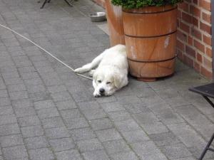 Genügsamer Hund